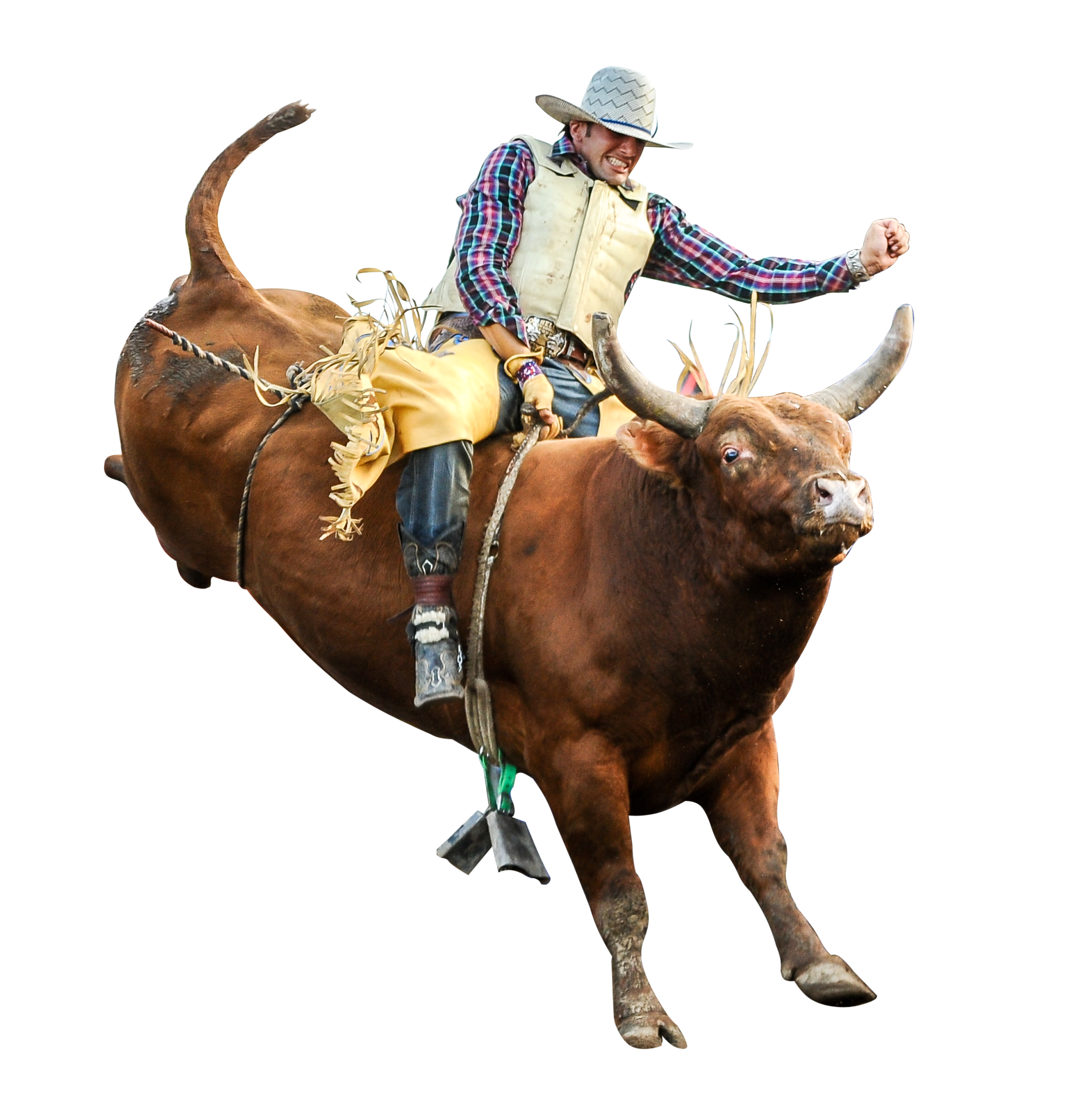 Committees Rice Bull Riding Company